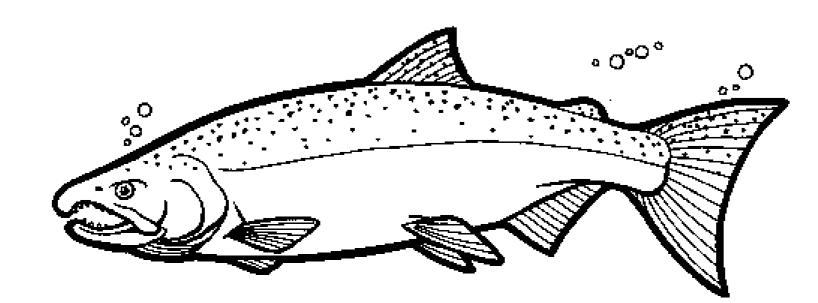Color The Coho Salmon