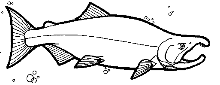 Color The Sockeye Salmon